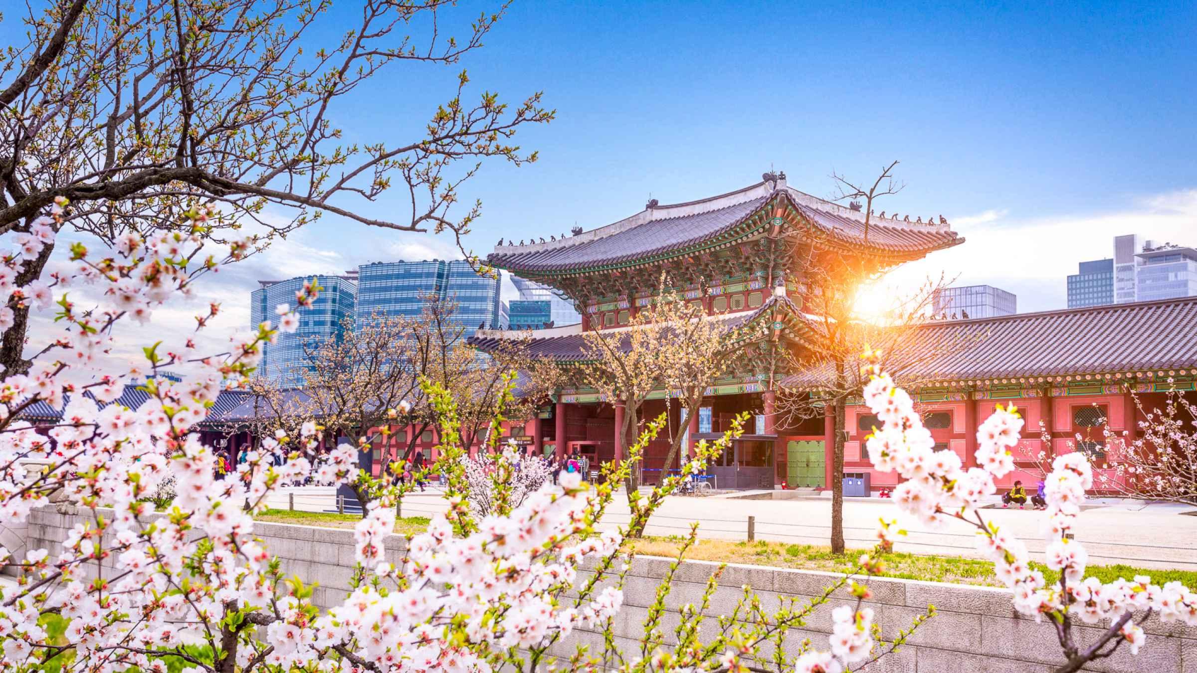 Jobs in South Korea   BCG Careers