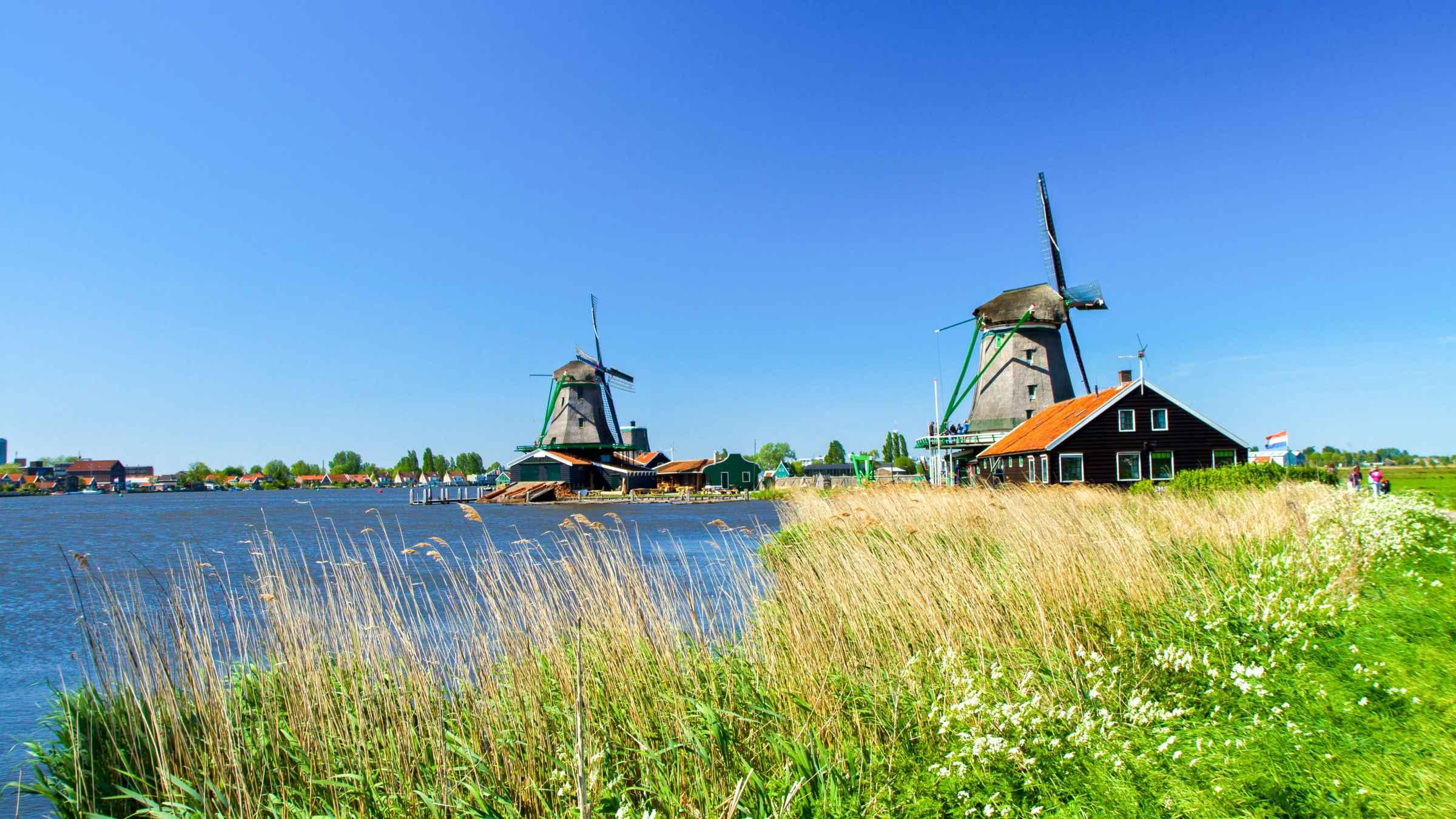 Volendam Windmills   GetYourGuide