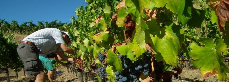 Private Guided Wine Tour to the Priorat by a Local
