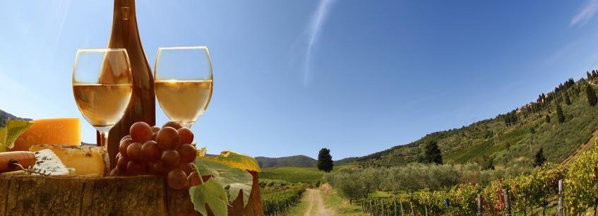 Halve dag Toscaanse heuvels wijnproeven vanuit Pisa of Lucca