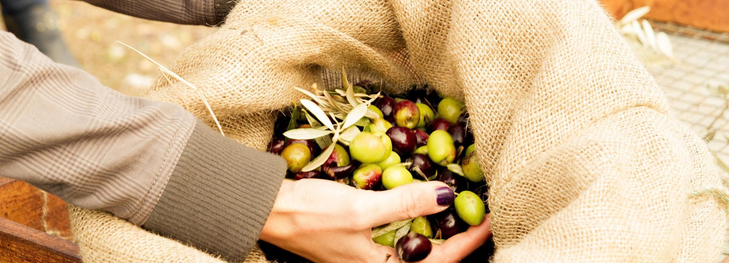 Tour d'huile d'olive de Nauplie