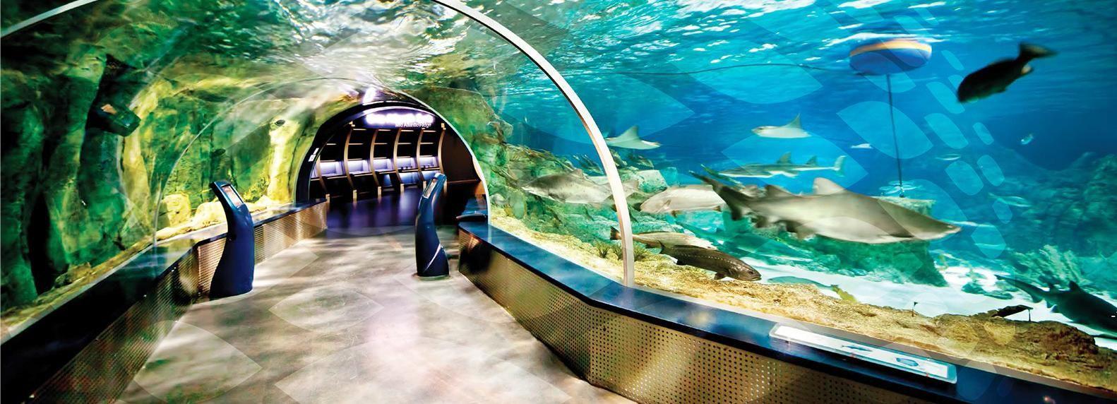 Istanbul: Aquarium und Aqua-Florya -Einkaufszentrum