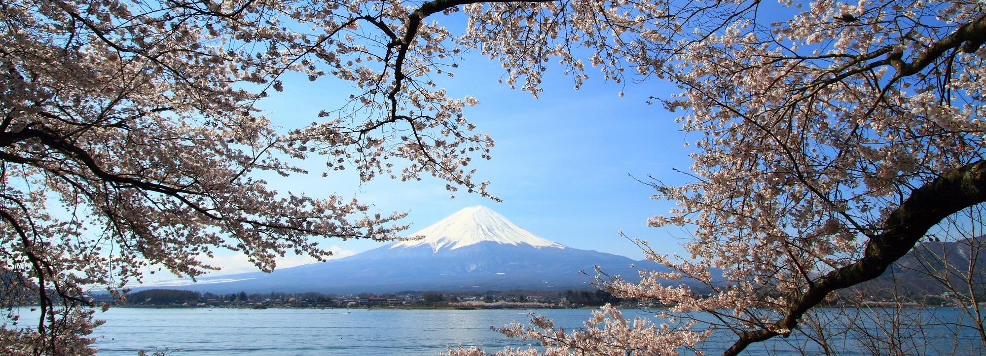 Mount Fuji Full-Day Tour from Tokyo with Lunch