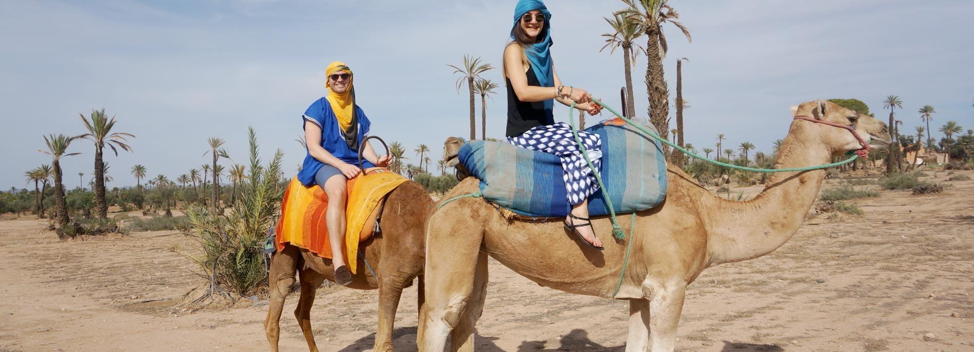Marrakech: Camel Ride in Palm Groves with Tea Break