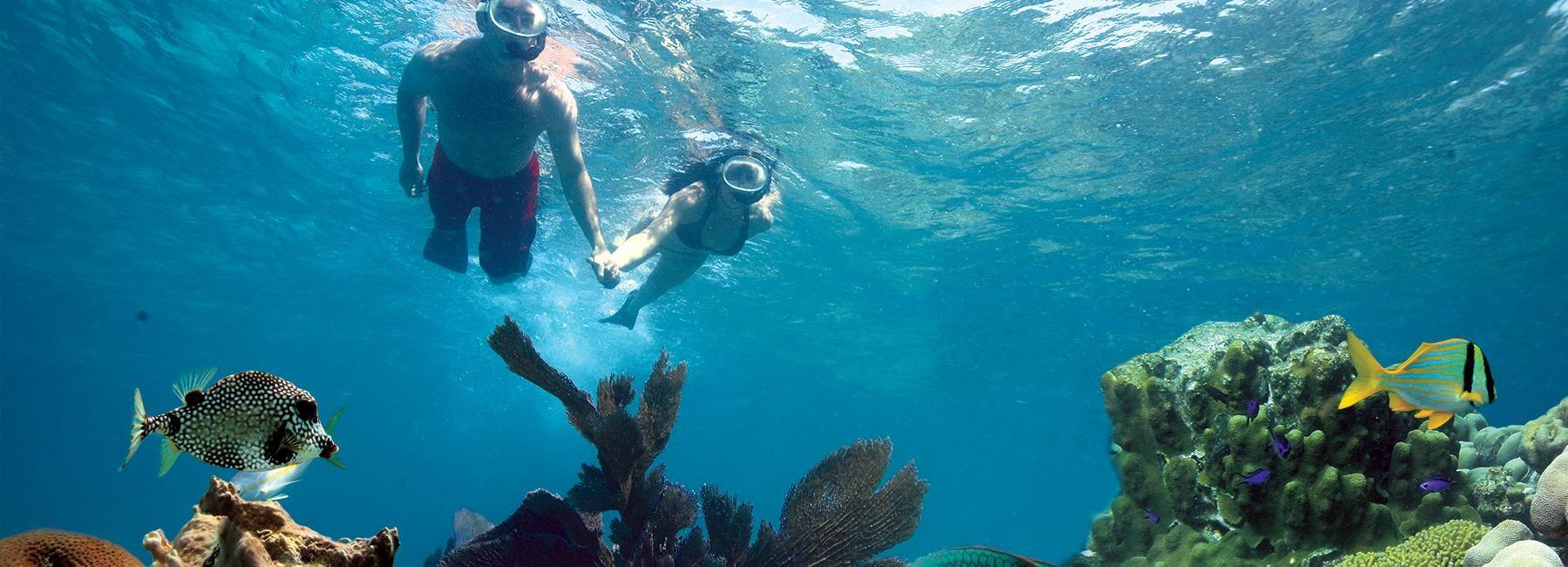 Key West 3-Hour Snorkeling Adventure