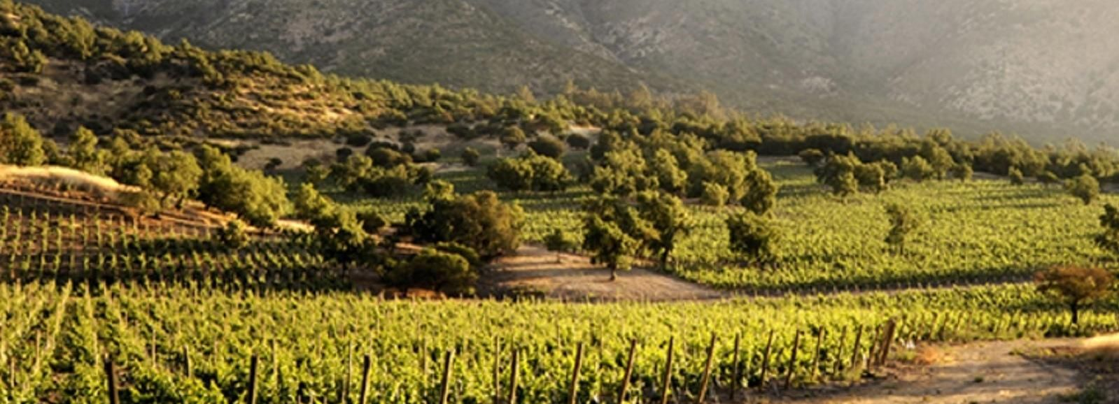 From Santiago: Maipo Valley Wine Tour