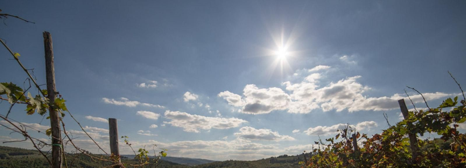 Chianti at Sunset: Small Group Excursion