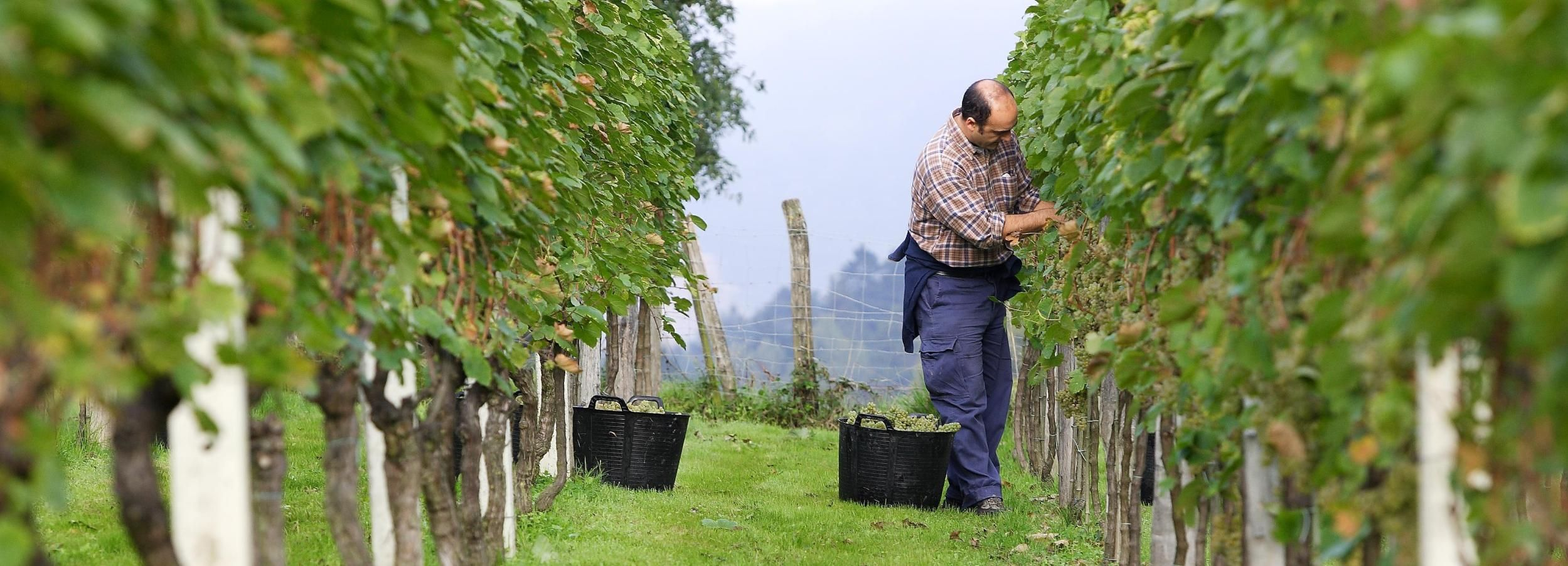 Txakoli Winery Visit and Getaria & Zarautz Villages Tour