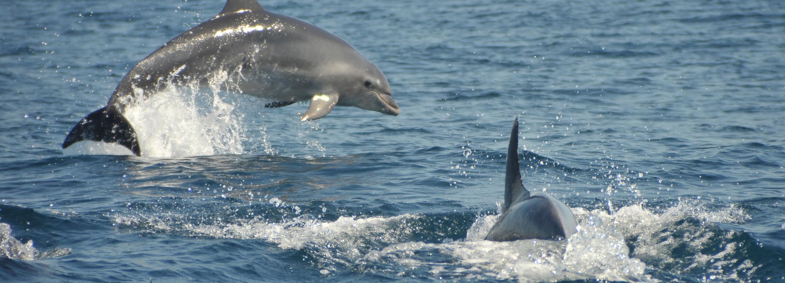 Albufeira: Cruzeiro Grutas e Golfinhos