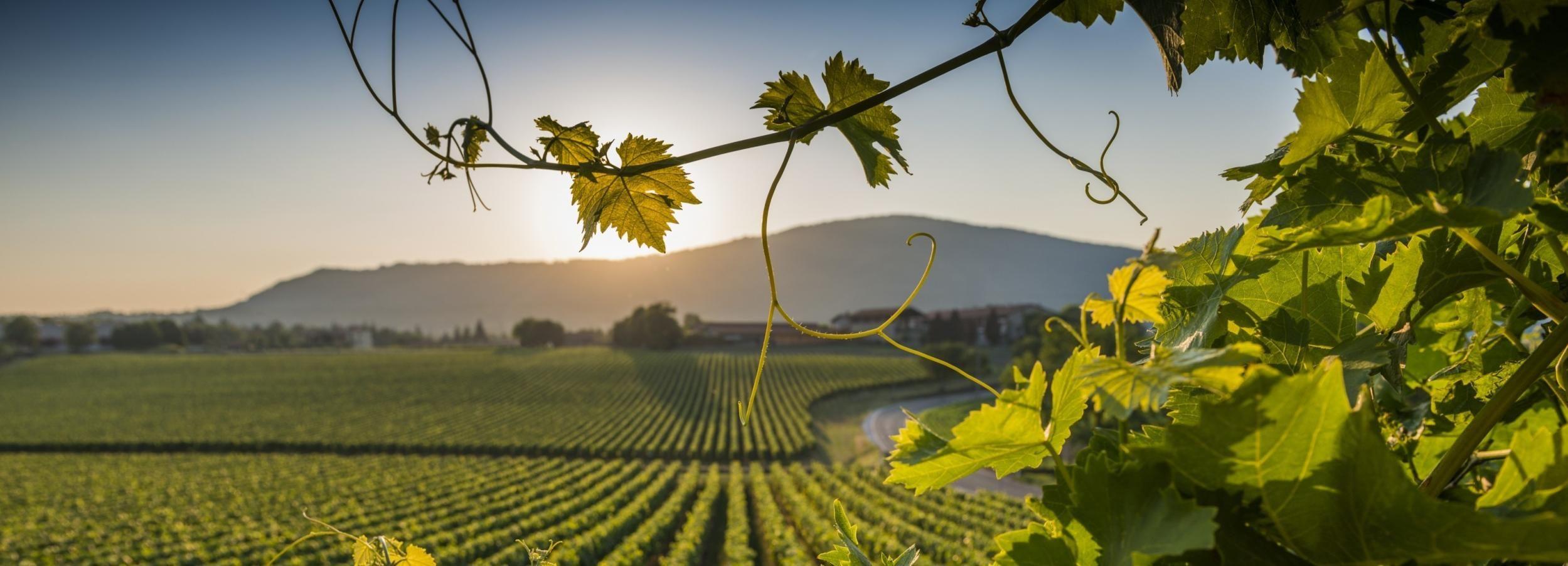 Франчакорта: тур из Милана с дегустацией вина и шопингом