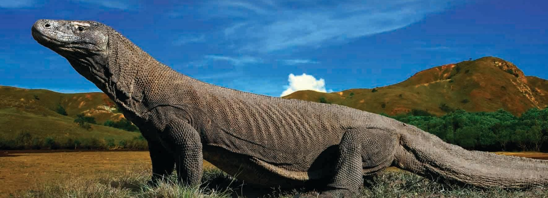 Komodo Islands: Private 2-Day Tour with Phinisi Boat Stay
