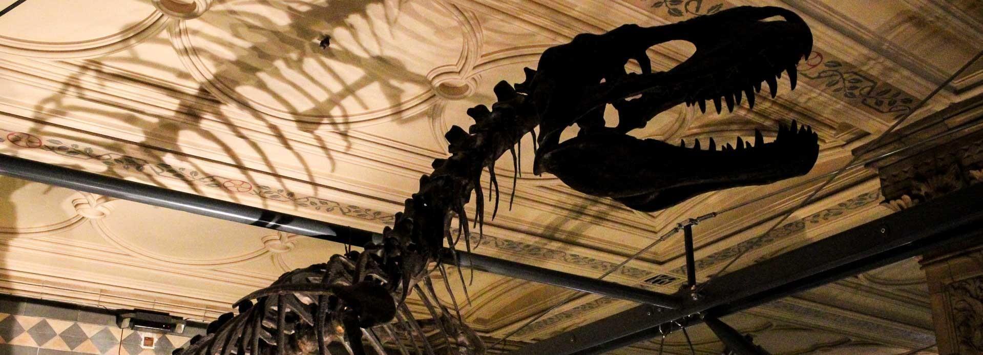 Londra: Natural History Museum con accesso prioritario