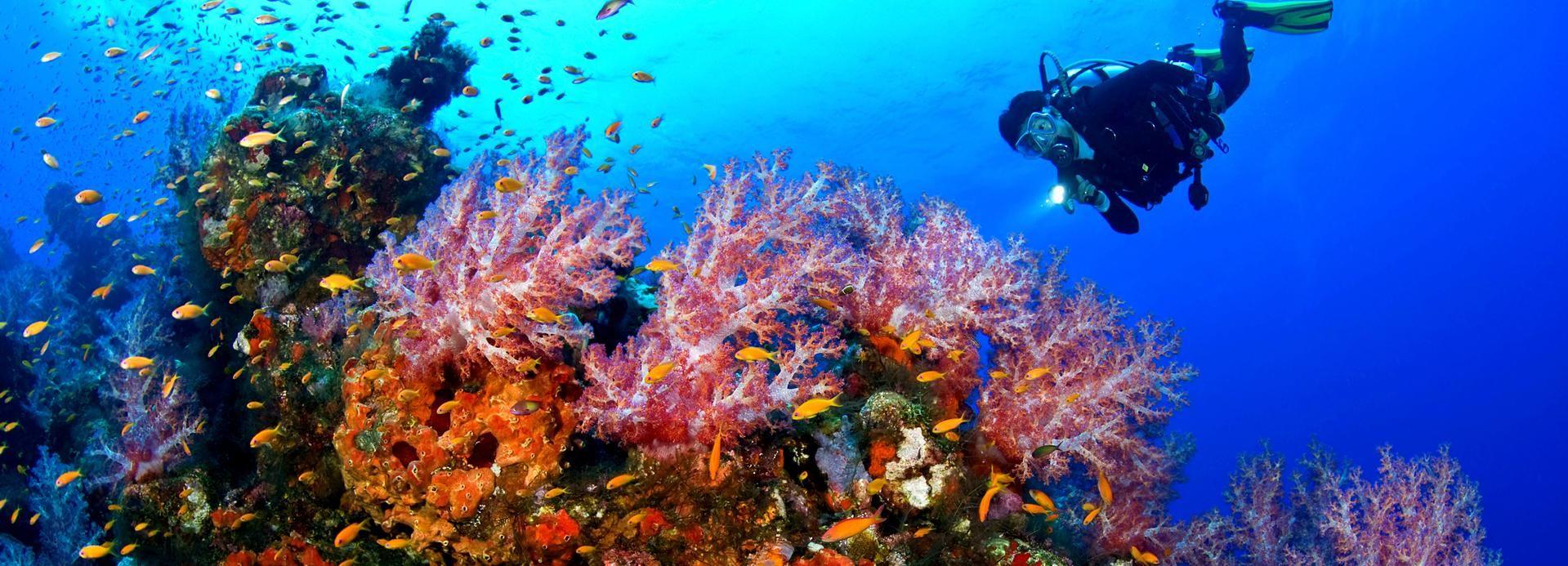 Kusadasi Diving Experiance