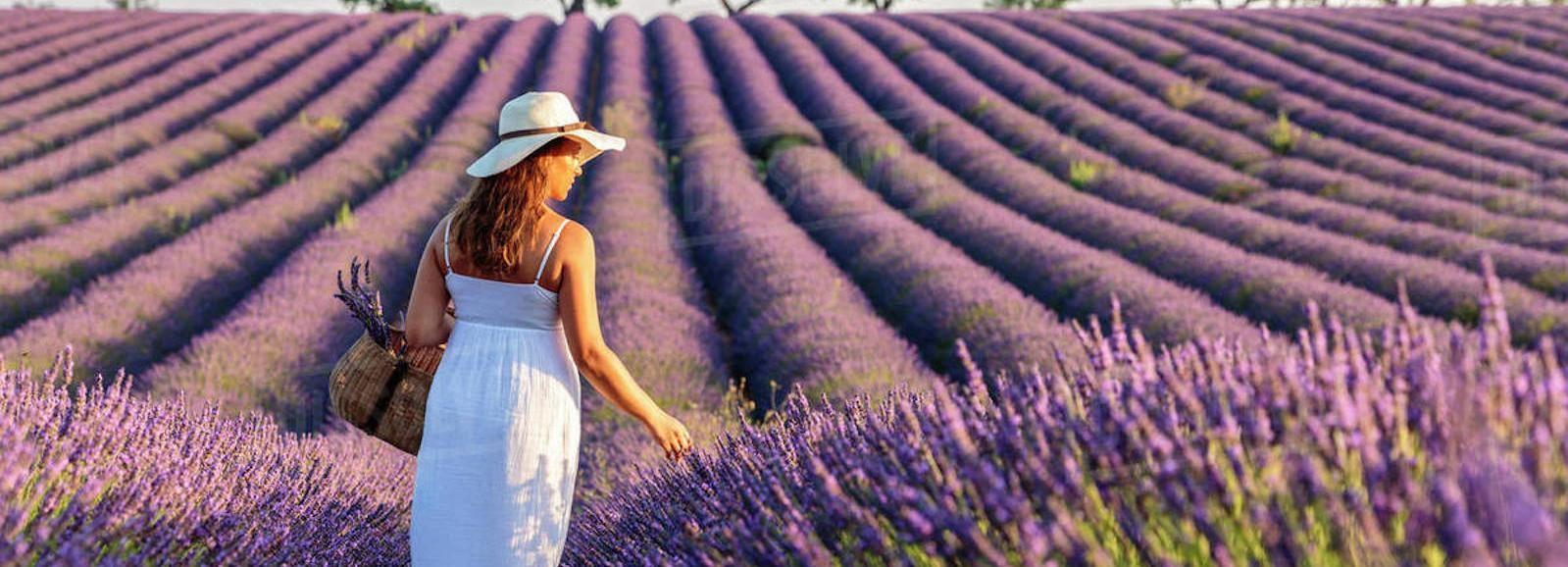 Depuis Nice: 1jour en Provence sur le thème de la Lavande