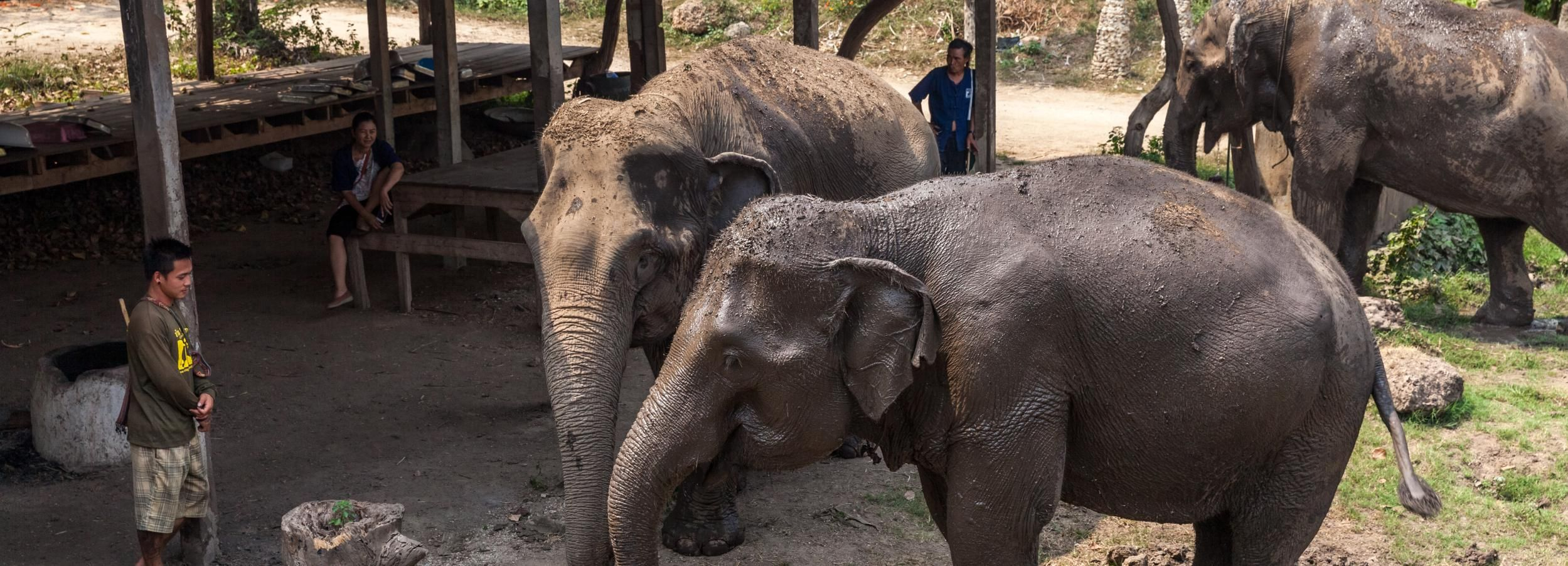 Elefanten-Schutzzentrum & Kanchanaburi Highlights Privattour