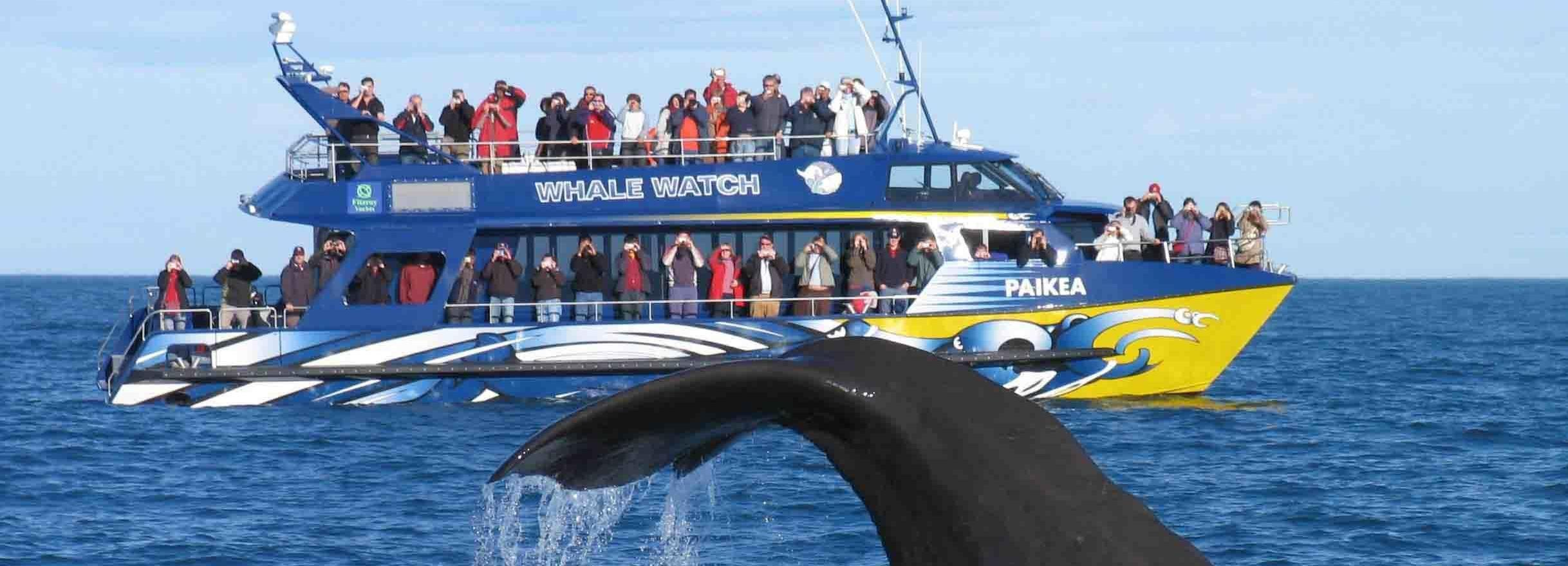 Kaikoura Whale Watching Premium Day Tour vanuit Christchurch