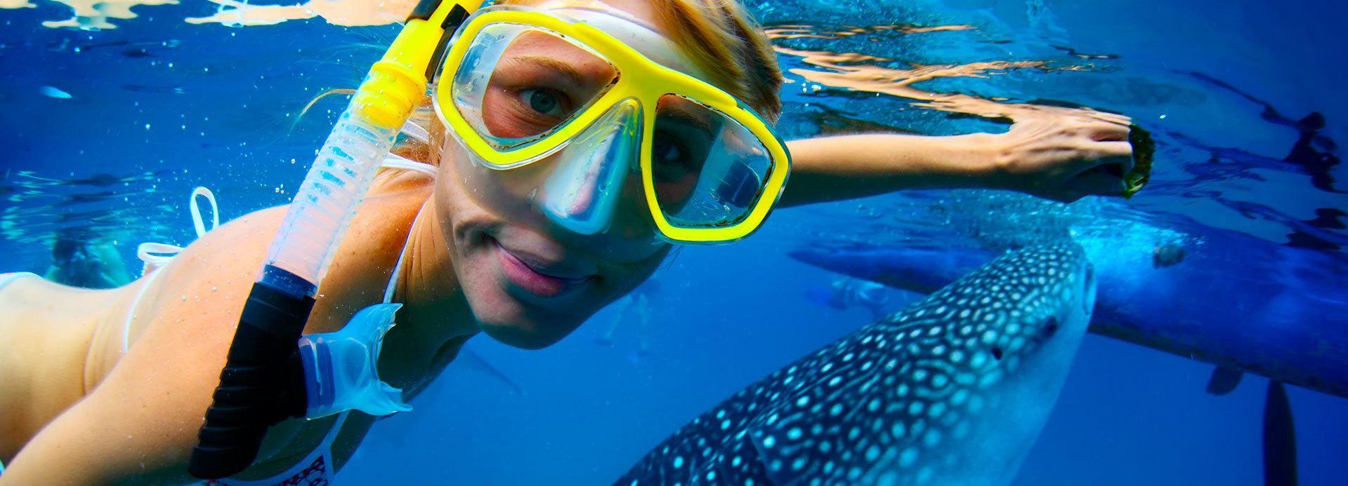 Riviera Maya: Schwimmen mit Walhaien