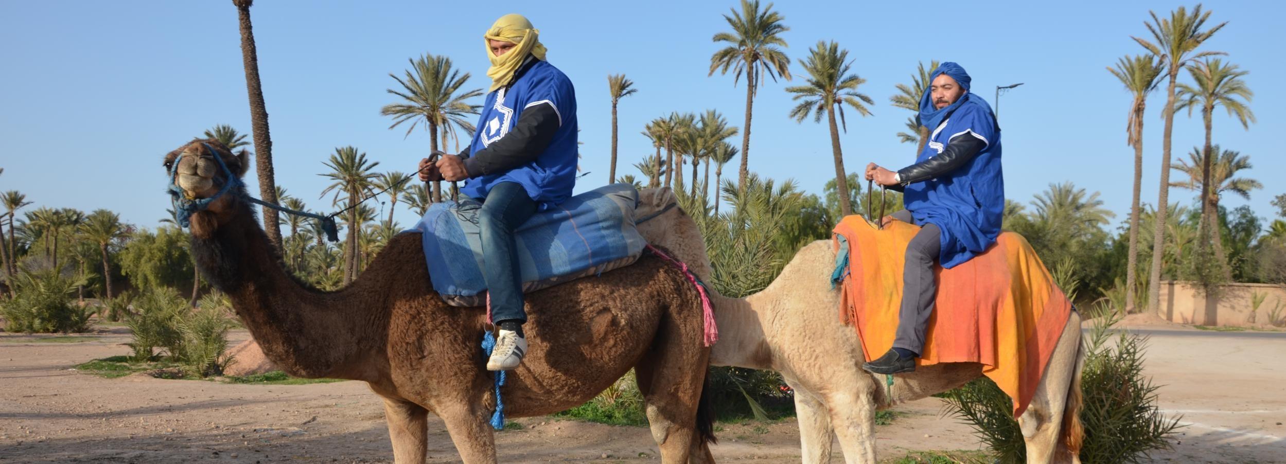 Marrakech: giro in cammello nei palmeti con pausa per il tè
