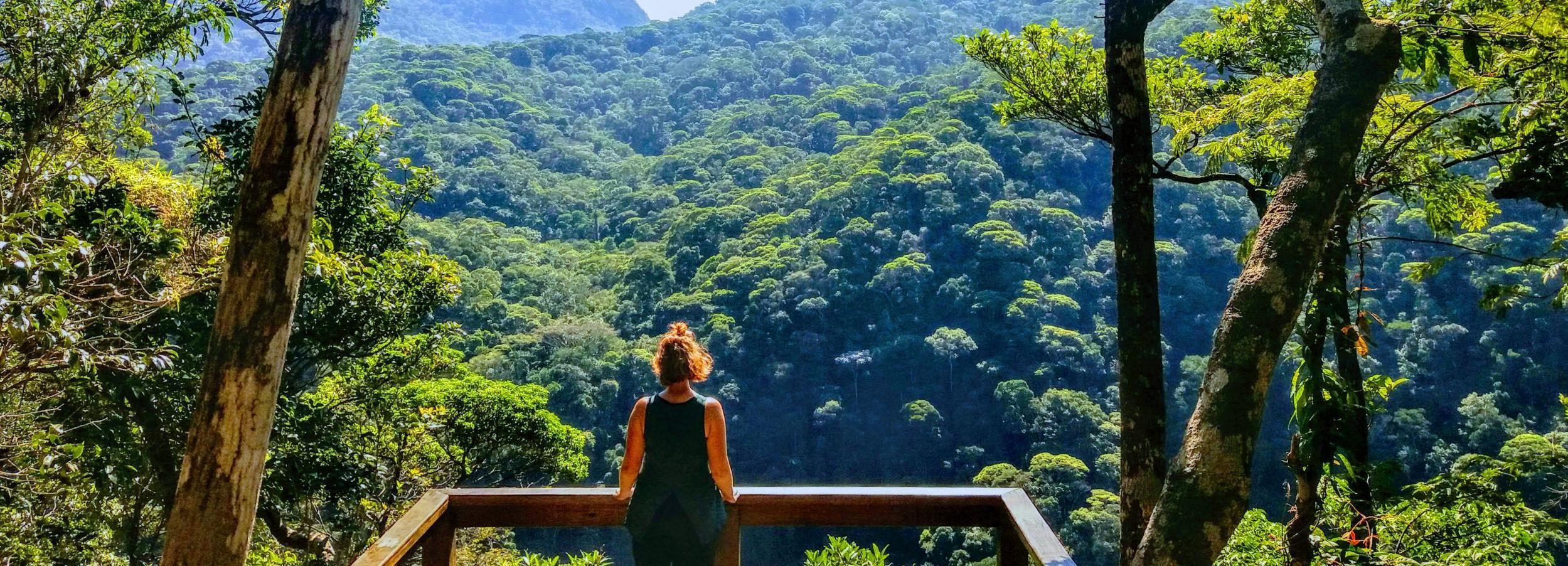 Bosque de la Tijuca: tour familiar guiado en grupo reducido