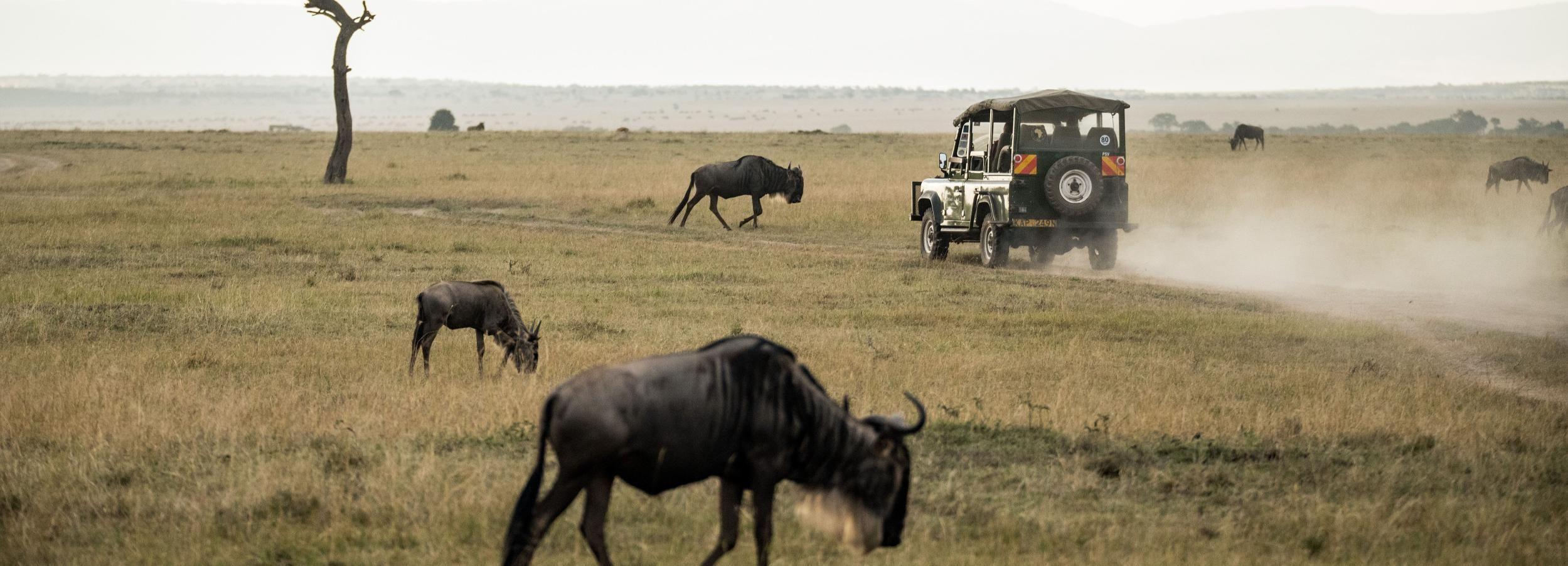Depuis Johannesburg: safari au parc national de Pilanesberg