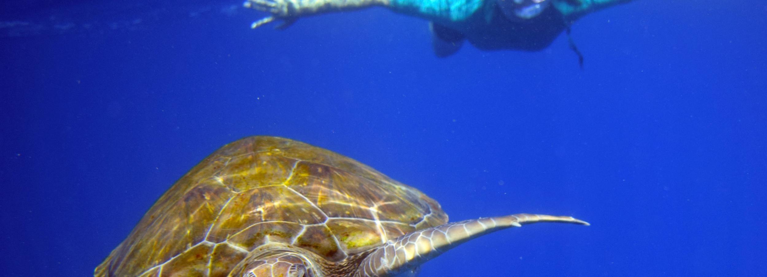 Kayak y esnórquel con tortugas