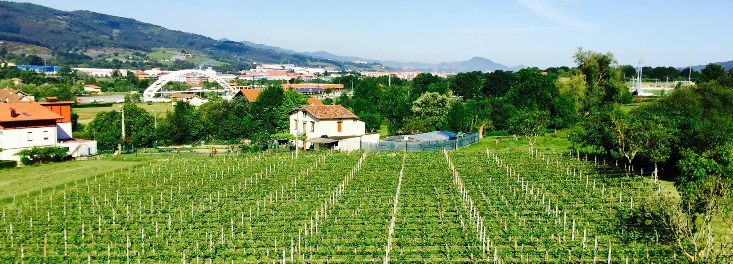 Bilbao: tour guiado de degustación de vinos en Txacoli y almuerzo vasco