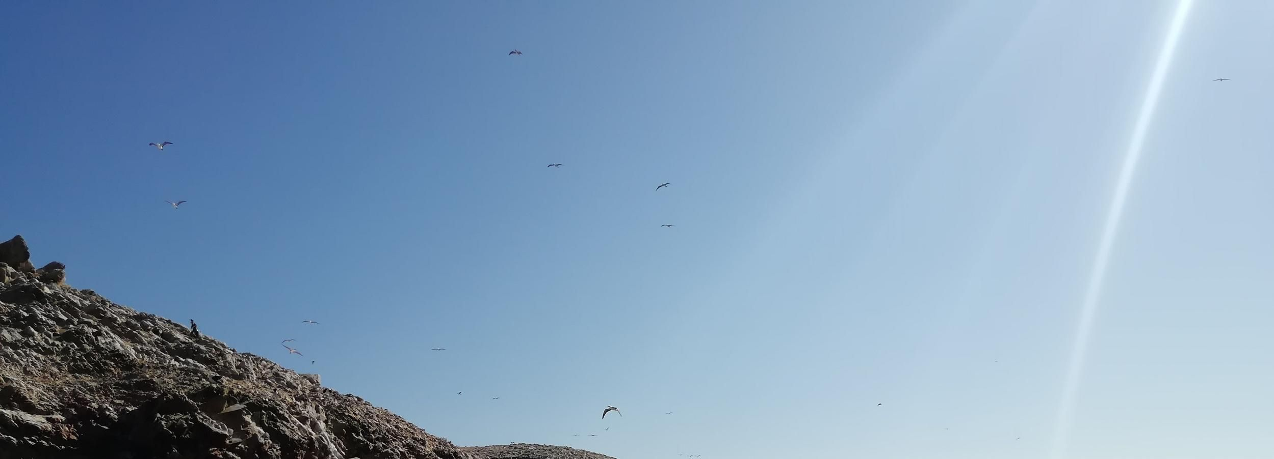 From Lima: Ballestas Islands, Winery & Huacachina Oasis Tour