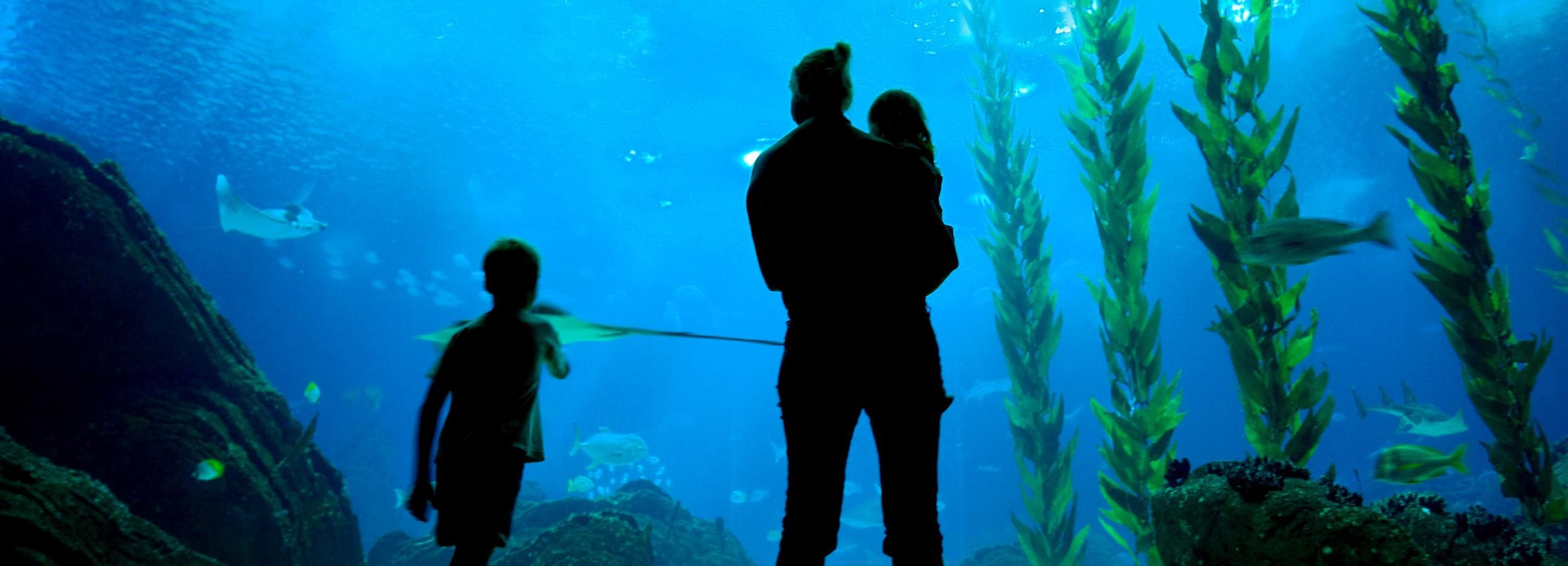Lisbon: 48-Hour Oceanarium and Hop-On Hop-Off Bus Tour