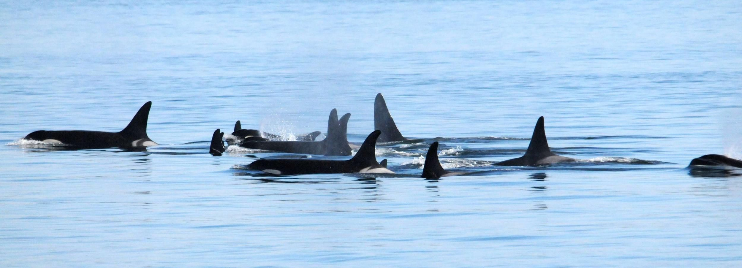 Vancouver: Whale Watching Victoria Trip & Return by Seaplane