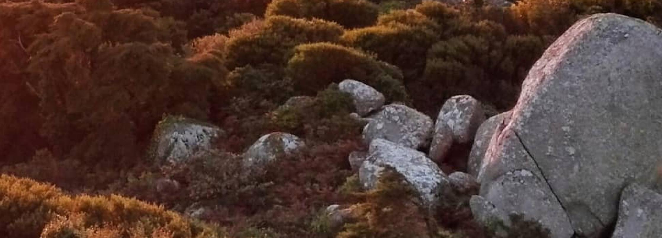 Passeio Privado pela Noite: Montanhas de Sintra Inbetween Wolves