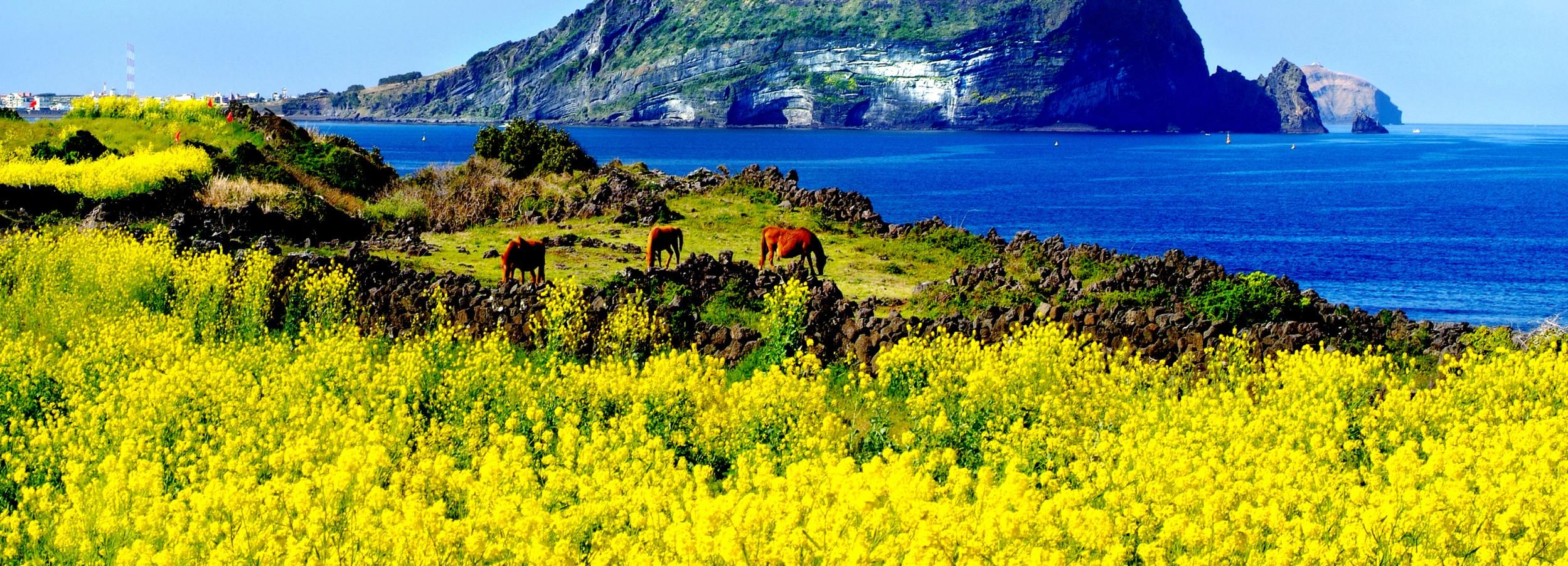 Jeju Island: Customized Private Full-Day Van Tour