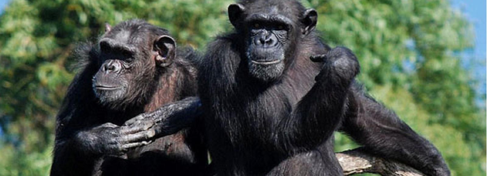 Nelspruit: Chimp Eden und Sudwala Caves Experience