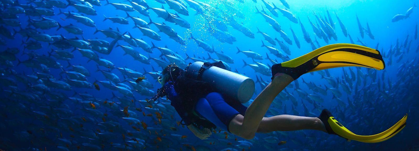 Koh Tao: expérience d'une journée de plongée sous-marine