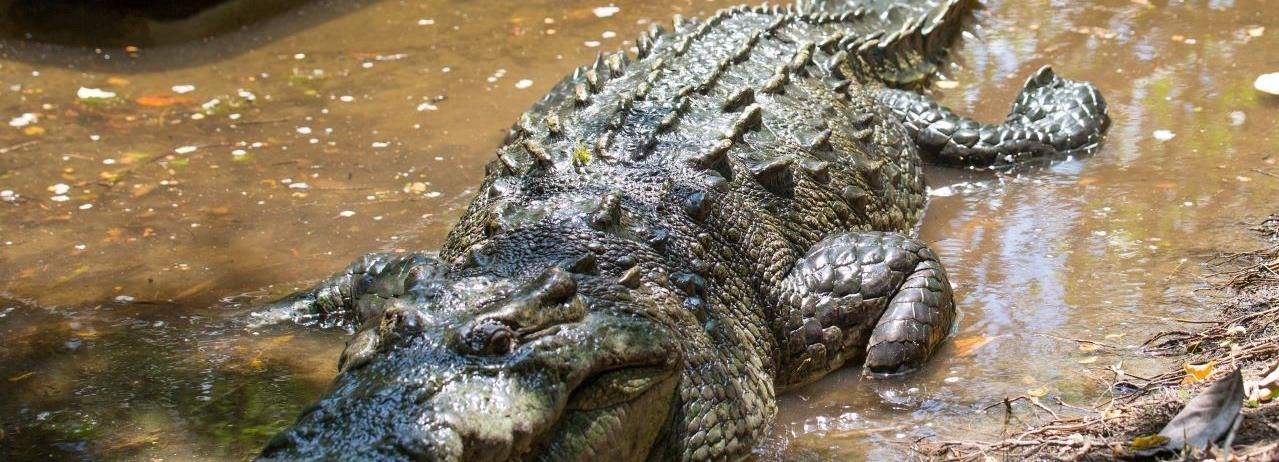Huatulco: Crocodile & Turtle Ecotour