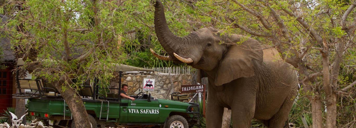 Johannesburg: 4-Tages-Safari im Kruger-Nationalpark