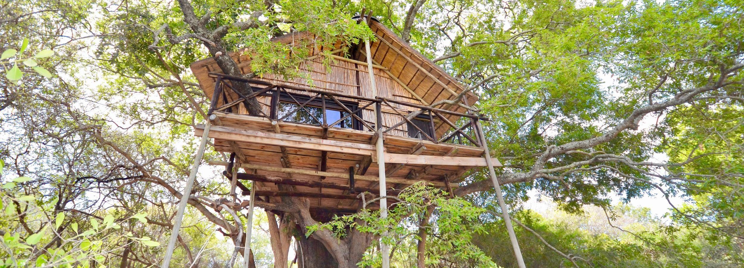 Kruger-Nationalpark: 3-tägige Safari mit Baumhausaufenthalt