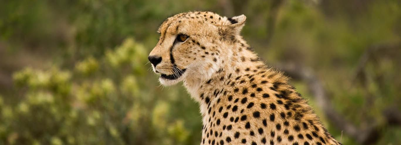 Johannesburg: 3-Tages-Safari im Kruger-Nationalpark