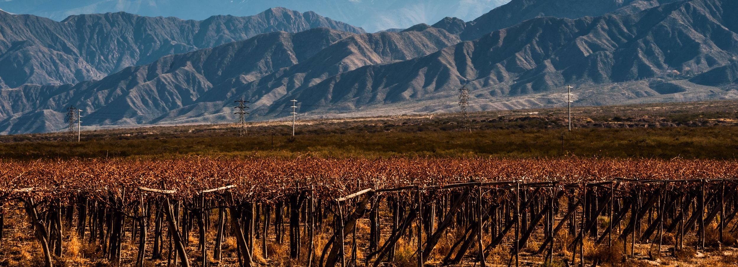 Mendoza: Full Day Wine Tour with 3 Course Lunch