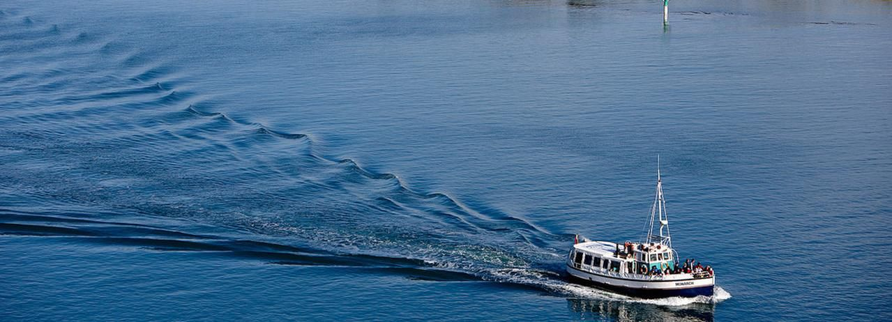 Dunedin: Wildlife Cruise en Penguin Colony Shore Excursion