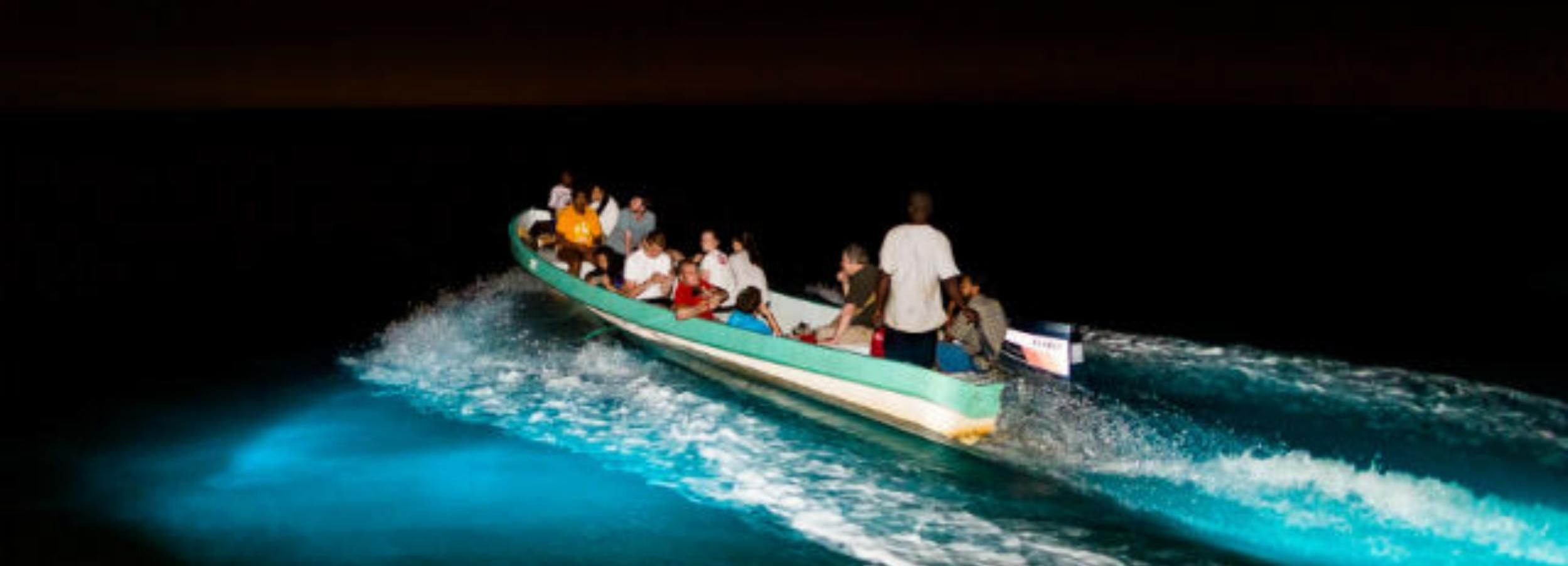 Puerto Escondido: Turtle Release and Bioluminescent Plankton