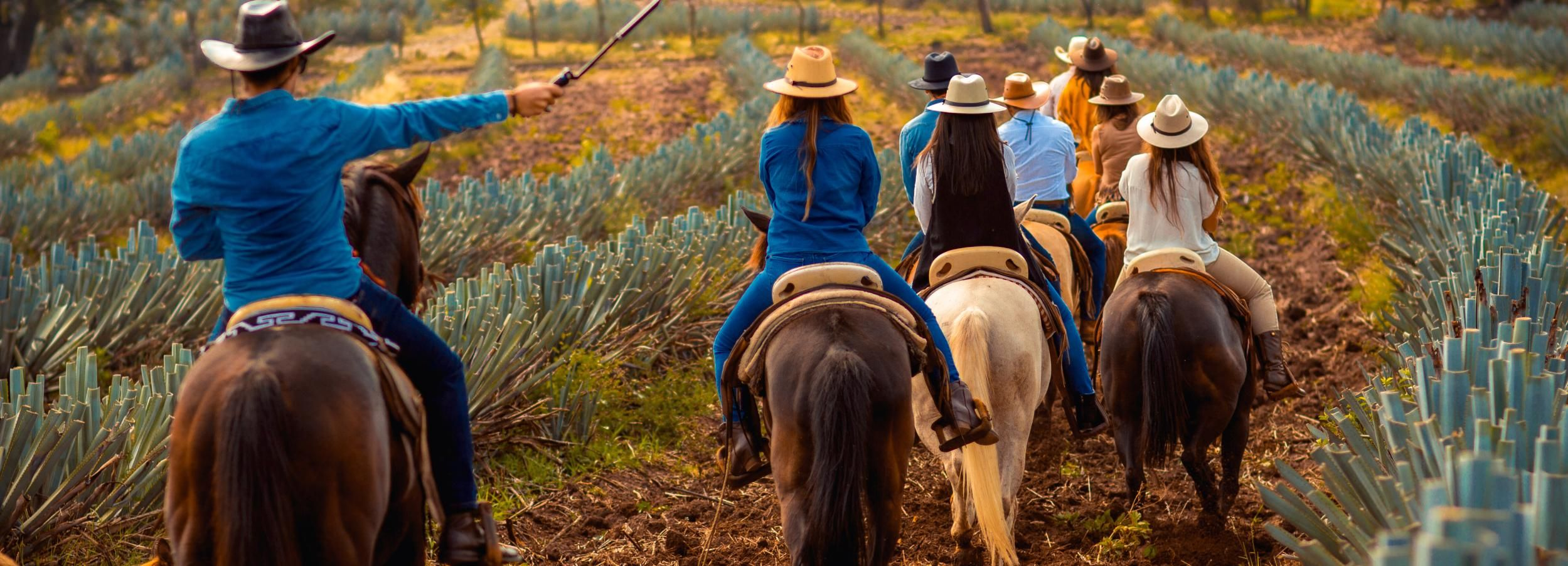 Tequila Town: Horseback Riding in Agave Fields