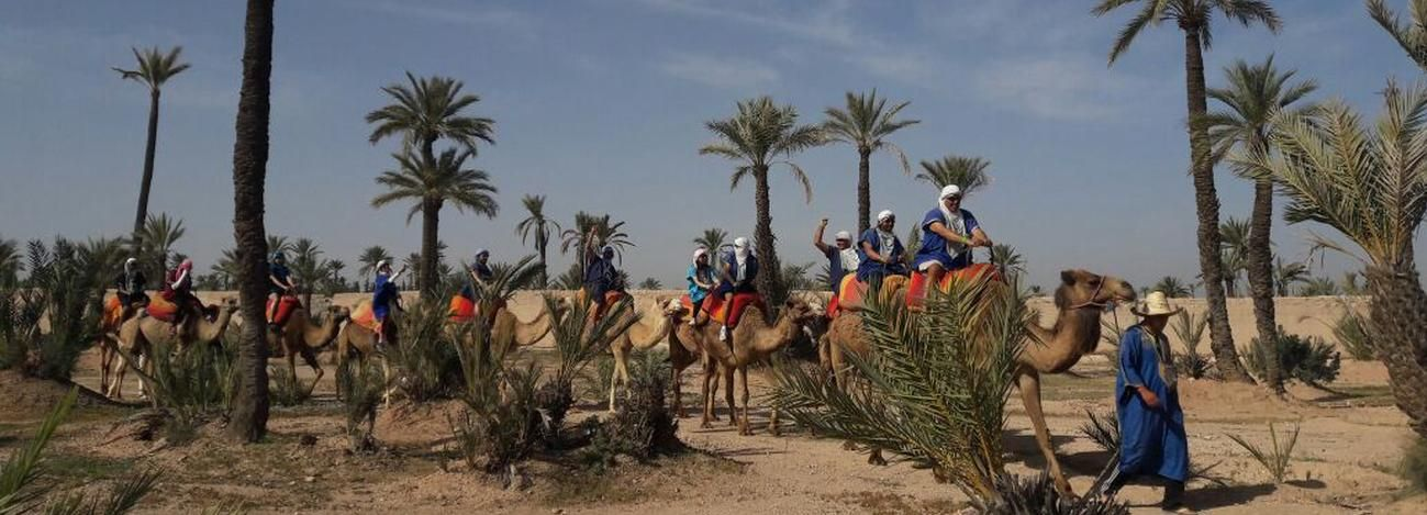 Marrakech: Camel Trek