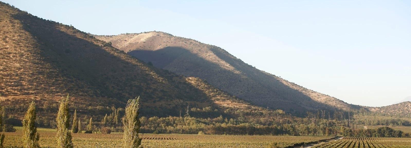 Santiago: Half–Day Santa Rita Vineyard Tour