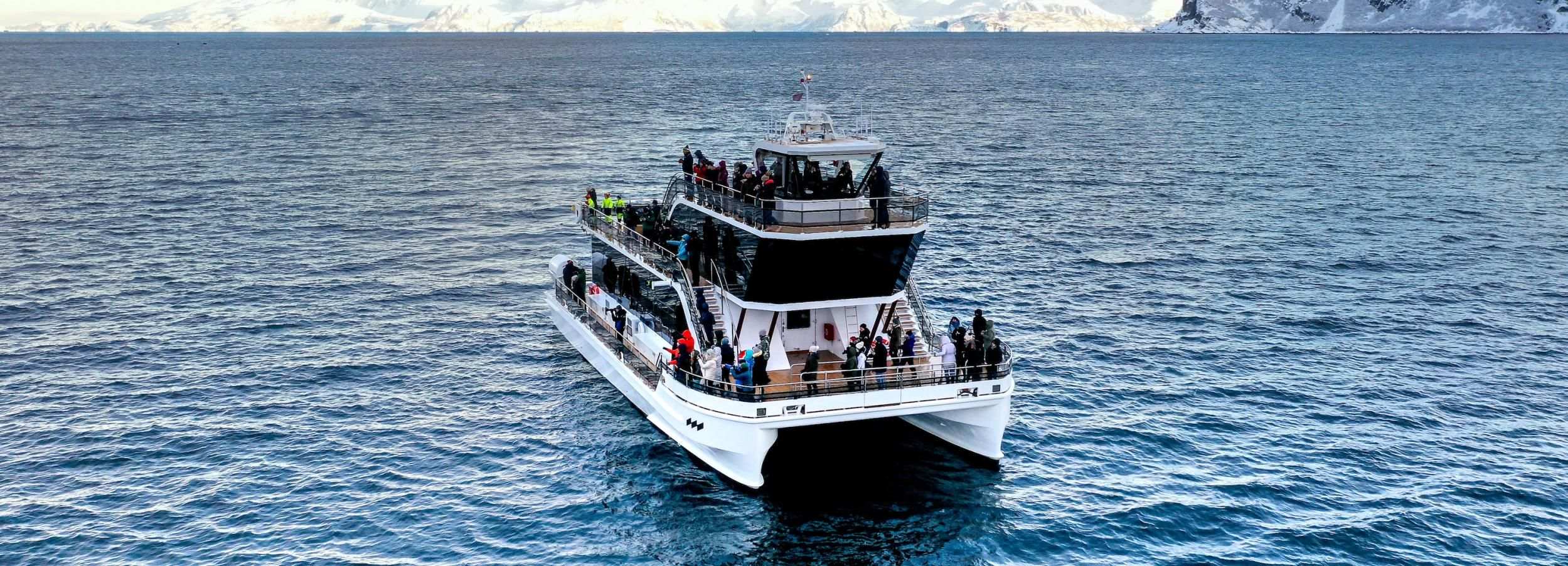 Tromsø: Whale Watching Tour by Hybrid-Electric Catamaran
