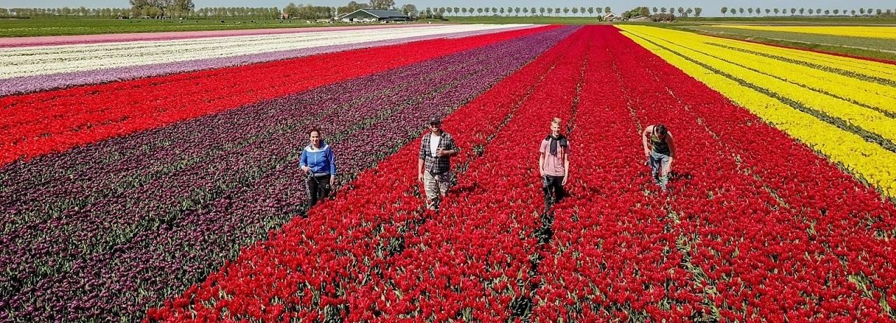 From Amsterdam: Tulip Fields, Windmills & Local Experiences