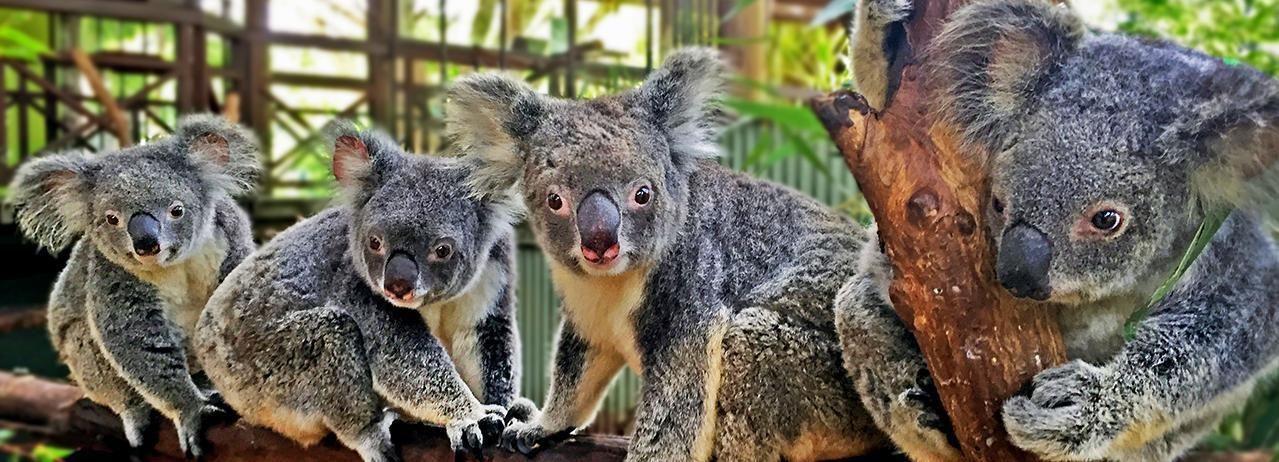 Pacchetto 4 parchi di Kuranda, Cairns e Port Douglas