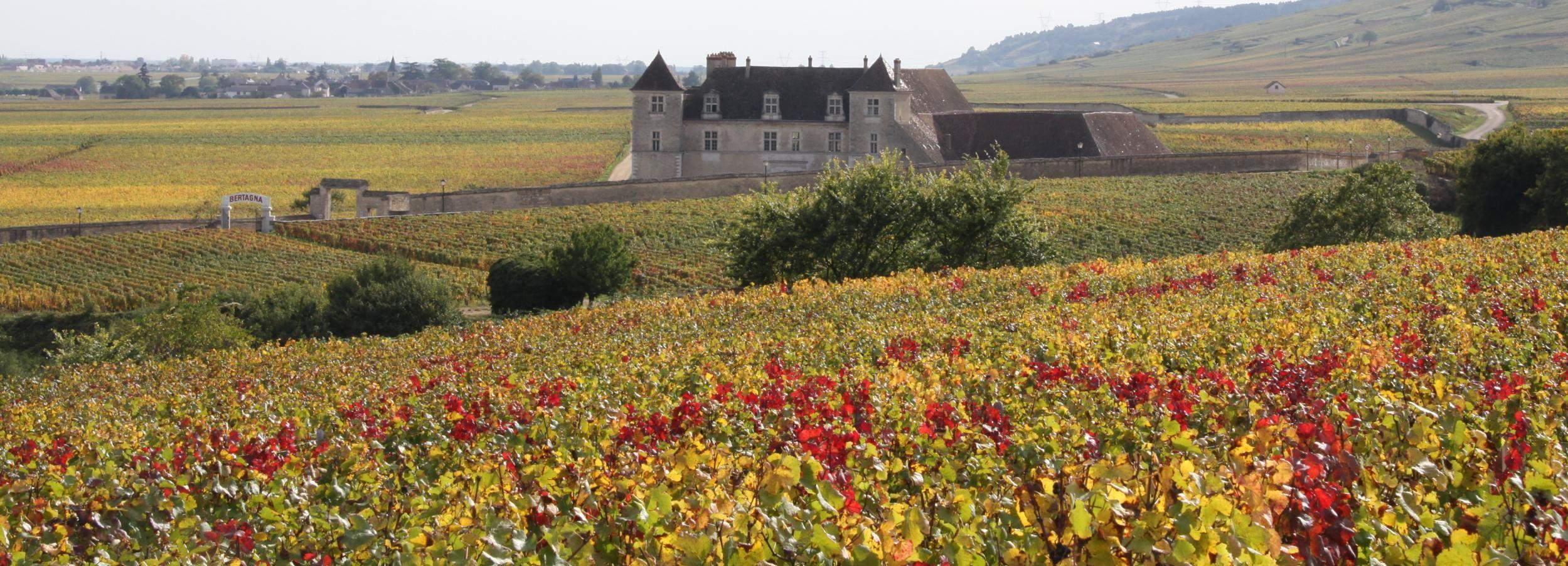 From Beaune: Burgundy 10 Wines Grand Cru Tasting Day Trip