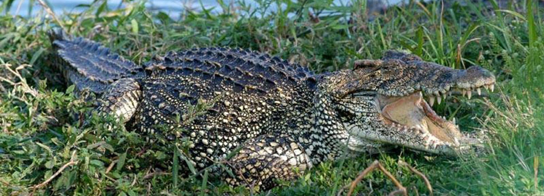 Depuis Varadero: visite des Caraïbes et ferme de crocodiles