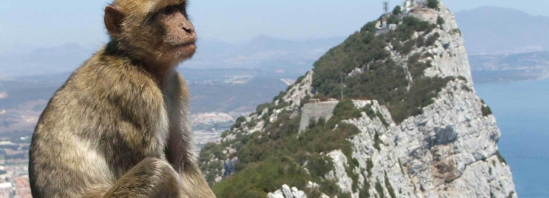 Directement de Malaga: excursion d'une journée à Gibraltar avec visite guidée