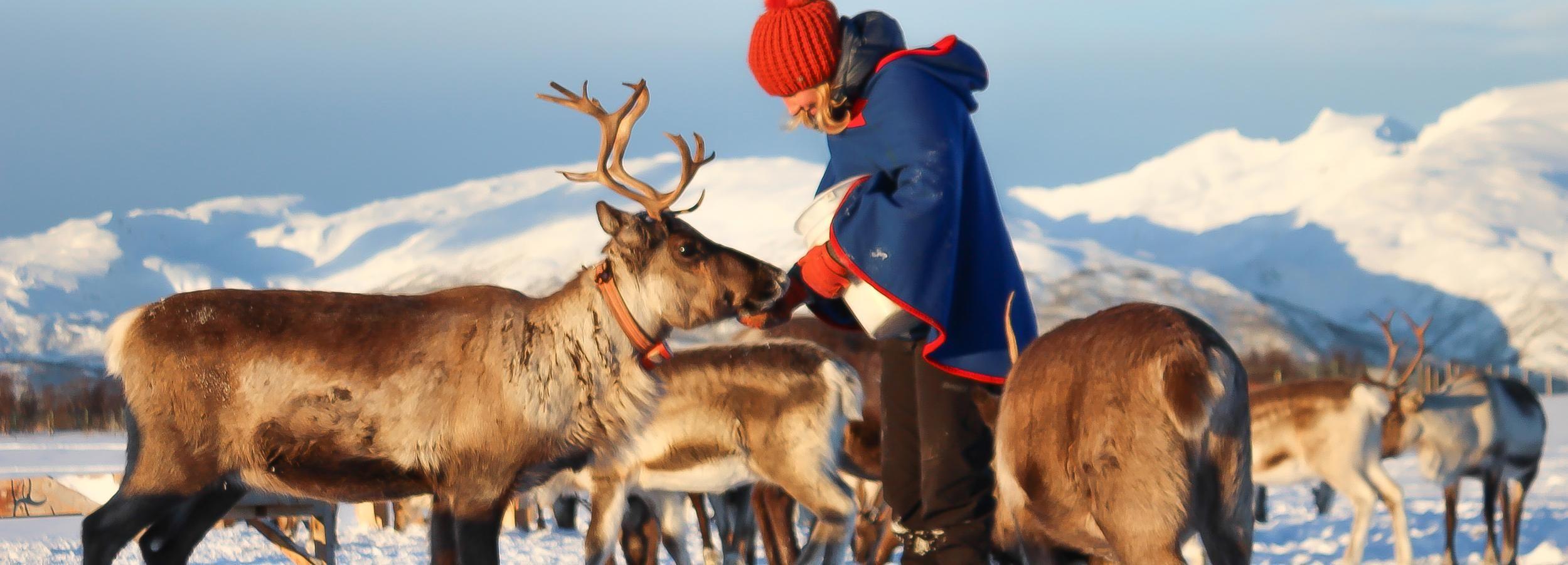 Vanuit Tromsø: rendierboerderij en de cultuur van de Sami